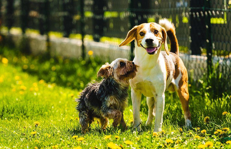 Infezioni Dei Cani