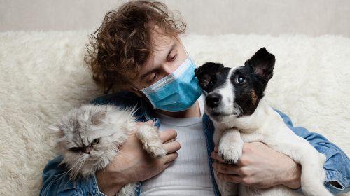 Coronavirus Cani E Gatti